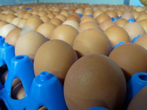 een blad eieren van boerderij van Steenbergen