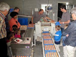 Het sorteren van de eieren bij Boerderij van Steenbergen