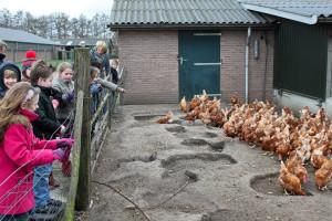 een schoolklas op bezoek bij Boerderij van Steenbergen